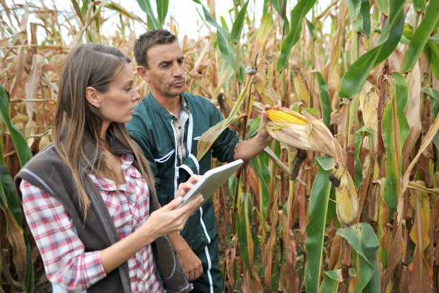 Divulgada lista das 20 pragas estrangeiras ameaçadoras da agricultura