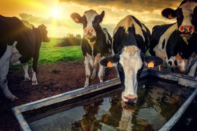 Produzir leite pode ser um bom negócio em 2018