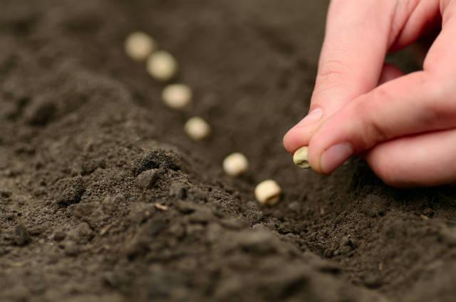 Condições do solo na seca podem melhorar com técnicas agrícolas