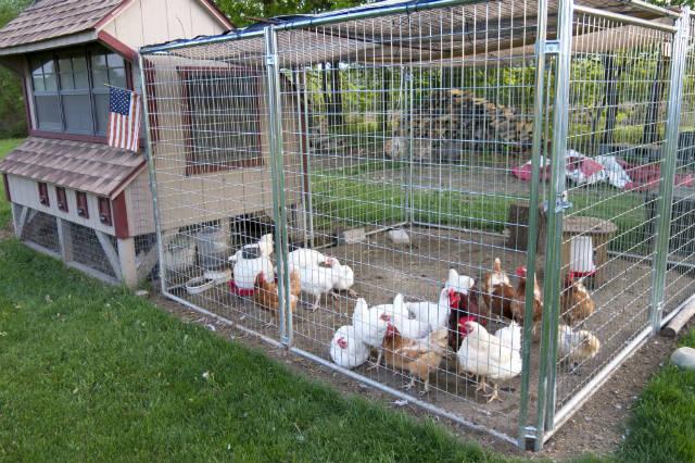 Esterco de galinha e palha de cana ajudam a recuperar águas residuárias