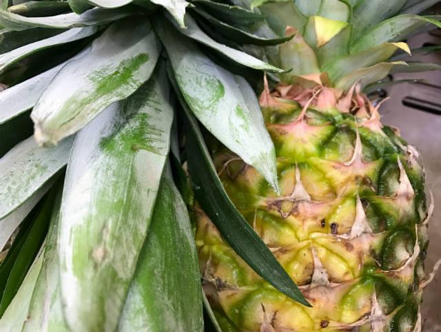 Saiba um pouco mais sobre fusariose do abacaxi