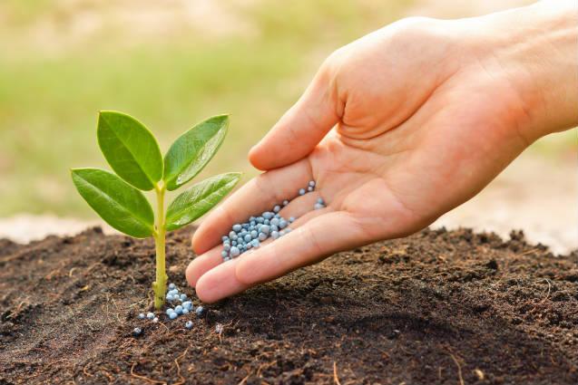 Custo com fertilizante é reduzido com nanotecnologia MicroActive