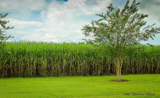 Bioeletricidade e biomassa