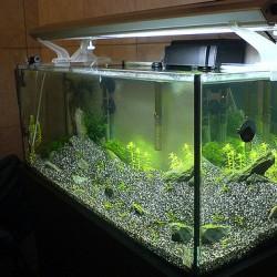 Como montar uma loja de aquários