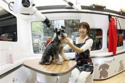 Abrir um Pet Shop: tosa, banho e atendimento