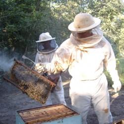 Curso de planejamento e implantação de apiários