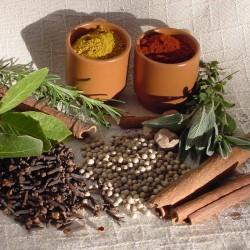 Cultivo de plantas medicinais orgânicas