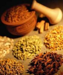 Cultivo e uso de plantas condimentares