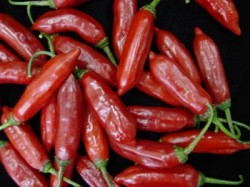 Cultivo e processamento de pimenta