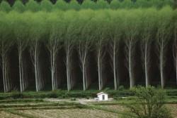 Curso de reposição florestal