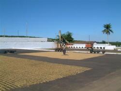 Construção e operação de terreiro-secador de café