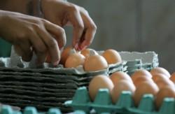 Curso de comercialização de ovos
