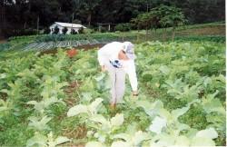 Curso Cultivo Orgânico de Hortaliças - Adubação Orgânica
