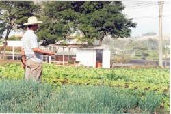 Curso Cultivo Orgânico de Hortaliças - Irrigação