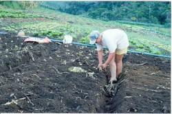Curso Cultivo Orgânico de Hortaliças - Mudas
