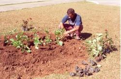 Planejamento, Implantação e Manutenção de Jardins