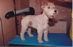 Banho e Tosa em Cães