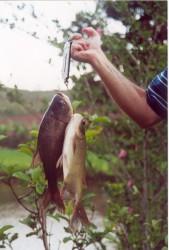 Técnicas de Processamento de Peixes