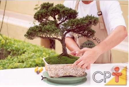 Saiba quais s o os materiais necess rios para o cultivo de bonsai tecnologia e treinamento - Cultivo de bonsai ...