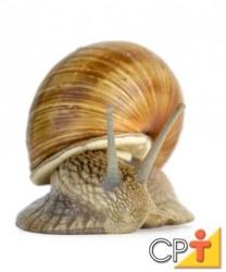 O local para criação de escargot deve ser livre de contato com produtos tóxicos, de fácil acesso, com quantidade suficiente de água