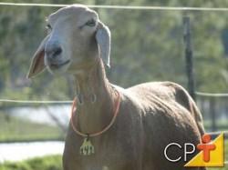 Apesar de se adaptarem a diferentes tipos de clima, a maior parte das raças de ovinos se desenvolve melhor em climas mais frios e com uma umidade relativa do ar média