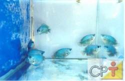Os produtores de peixes ornamentais utilizam o sistema intensivo, principalmente, para a reprodução e o cultivo inicial dos peixes