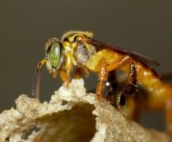 O mel colhido deverá ser levado a local limpo e logo envasado, quando em quantidades pequenas