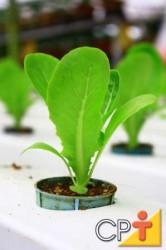 Caso se opte por usar recipientes para a semeadura, estes devem ser enchidos com um substrato