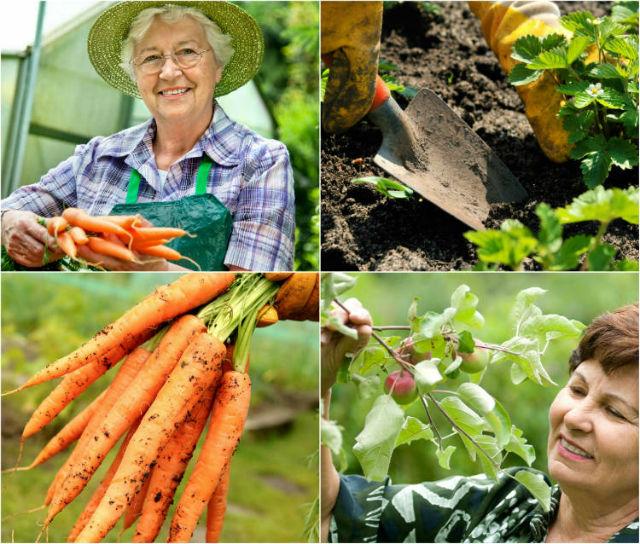 O que é agricultura natural
