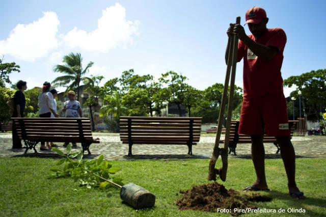 A importância da manutenção preventiva das árvores