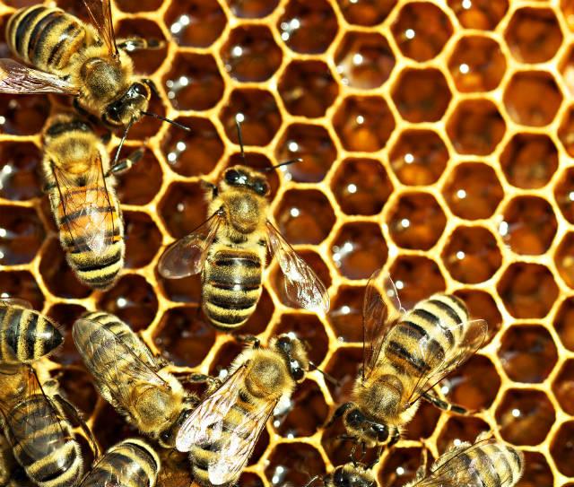 Como proteger a colmeia contra a varroa