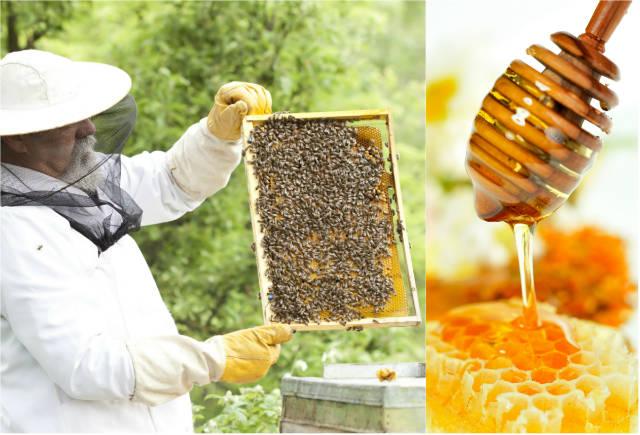 Evolução da apicultura e do mel no Brasil