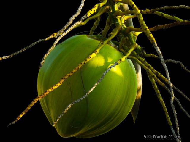 Produção de cocos - resolva os principais problemas