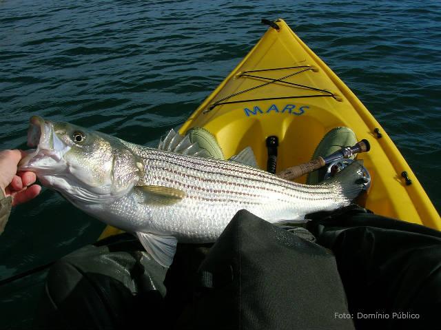 Ótimos peixes para criar em cativeiro