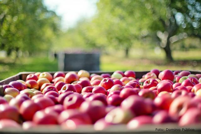 Cultivo de frutíferas em pequenas áreas