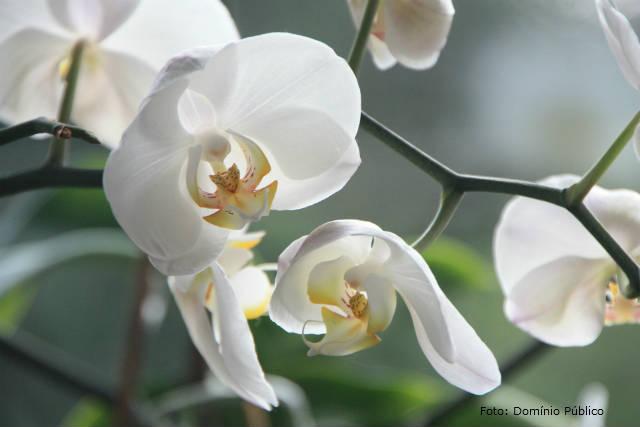 Cultivo de orquídeas - substrato, clima e luminosidade
