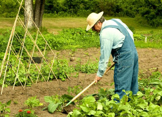 Saiba mais sobre agricultura sintrópica