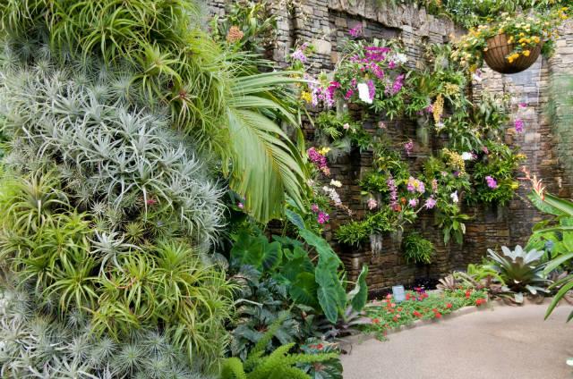 Descubra os benefícios do jardim vertical