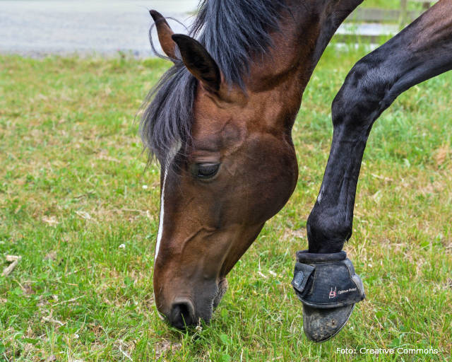 Descubra o que fazer em caso de tendinite em equinos