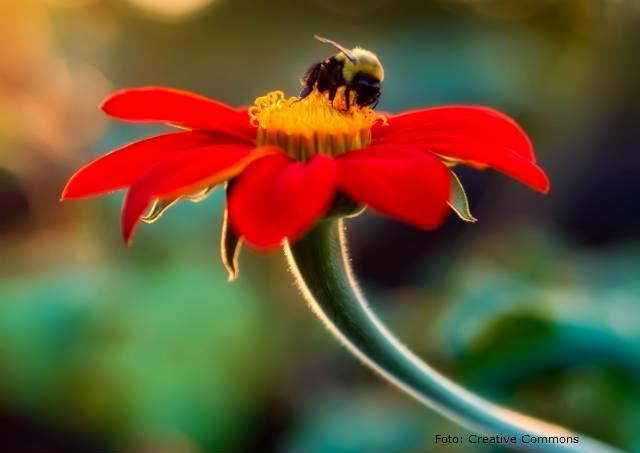 Sistemas agroflorestais ajudam na preservação de abelhas sem ferrão