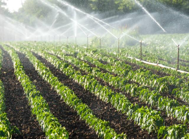 Dicas para tornar a irrigação mais eficiente