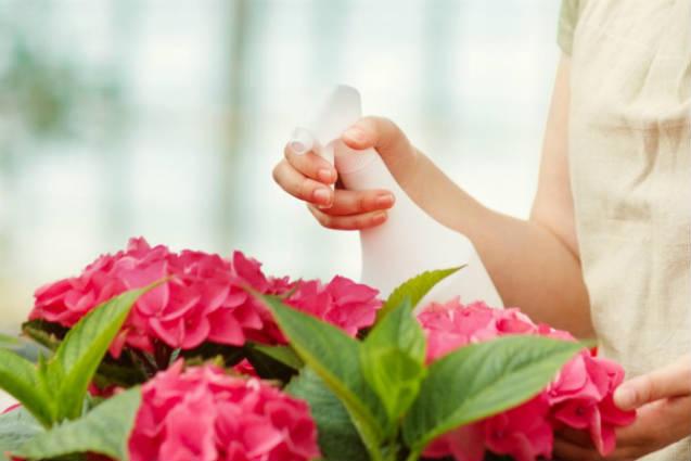 Cultivo de plantas em casa: controle de colchonilha de escamas