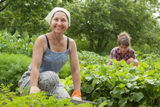 Como obter sucesso na horticultura