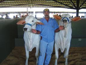 Animais da Fazenda CPT Agropecuária