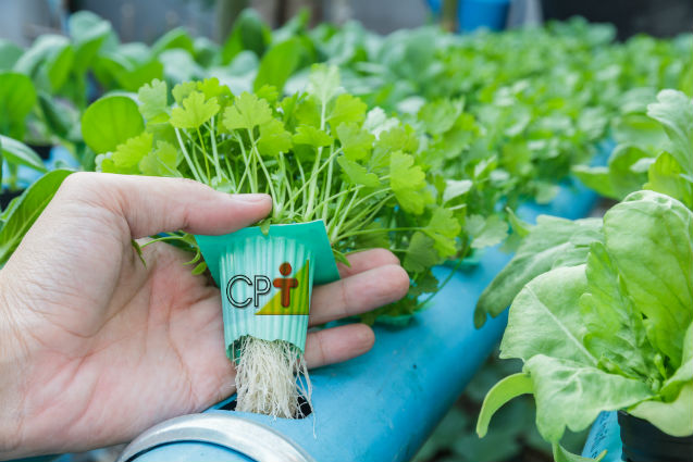 Hidroponia - tipos de sistema de cultivo sem solo   Artigos Cursos CPT