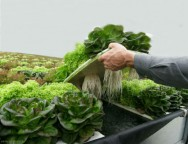Hidroponia - tipos de sistema de cultivo sem solo