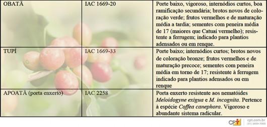 Características das cultivares