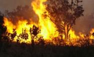 Aprenda Fácil Editora: As queimadas no Brasil e seus efeitos