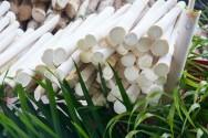 Resíduos do palmito pupunha são usados como alimento na dieta dos bovinos