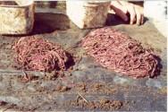 A produção de farinha de minhoca foi responsável por uma mudança na maneira de trabalhar com a minhocultura.